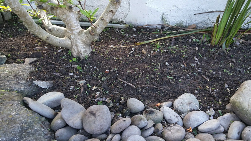 Soil and stones under magnolia tree