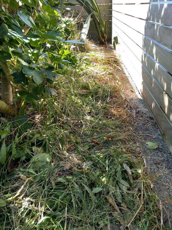 Cleared tall weeds from below deck area