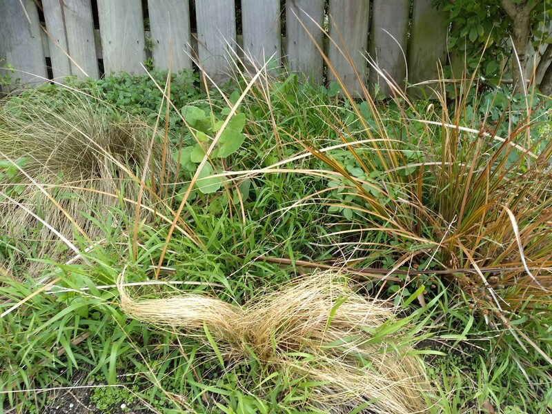 Native grasses contrast against the weeds
